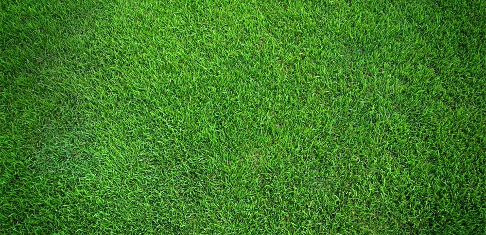 footer-green-bg